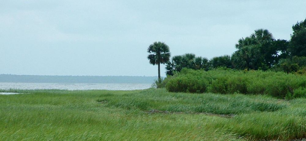 St. Marks National Wildlife Refuge shoreline near Lighthouse
